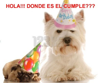 tarjetas de cumpleaños graciosas 16 perros hola donde es el cumple